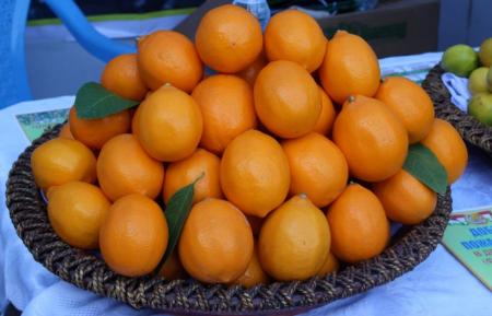 Лимон8752319